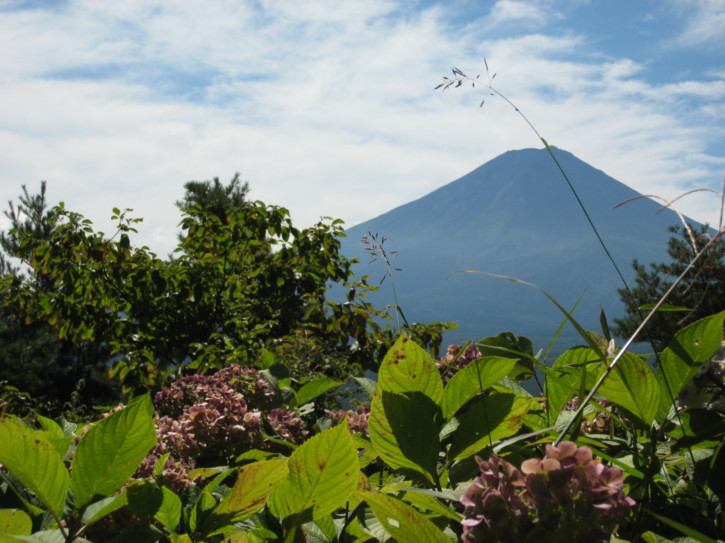 Flowers and Mount Fuji