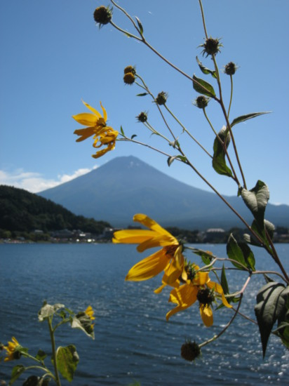 Mount Fuji seen through flowers