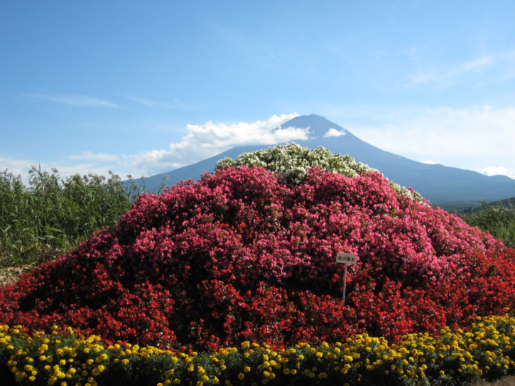 Botanical garden on the shore of Lake Kawaguchi