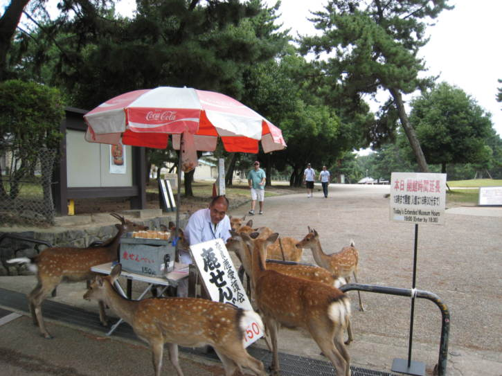 Deer food seller surprisingly popular with deer