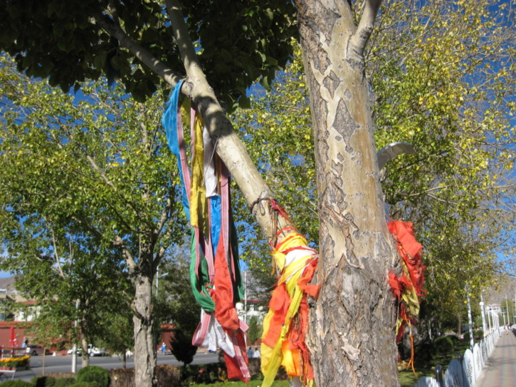Prayer flags around a tree