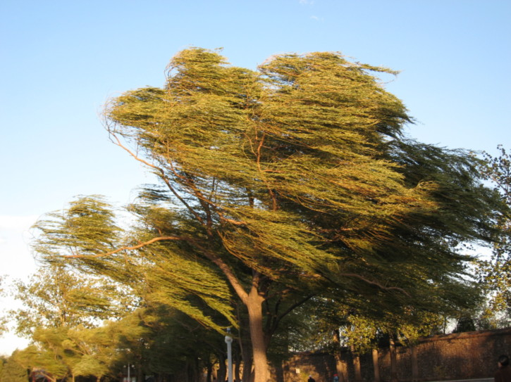 Trees blowing in the strong wind