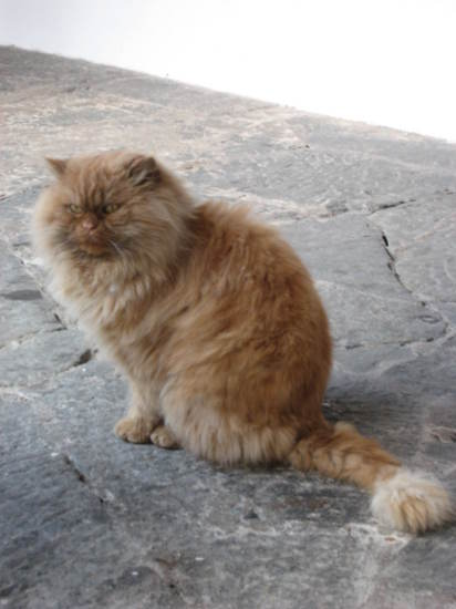 Cat at the monastery