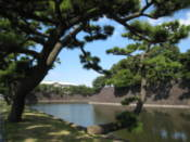 Tree hanging over the Imperial Palace moat