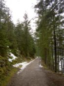 The path through the lakeside forest - free of snow
