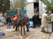 A donkey being loaded up
