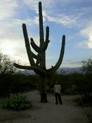 A Saguaro Cactus - And Me